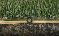 Hedgehog Launch 2